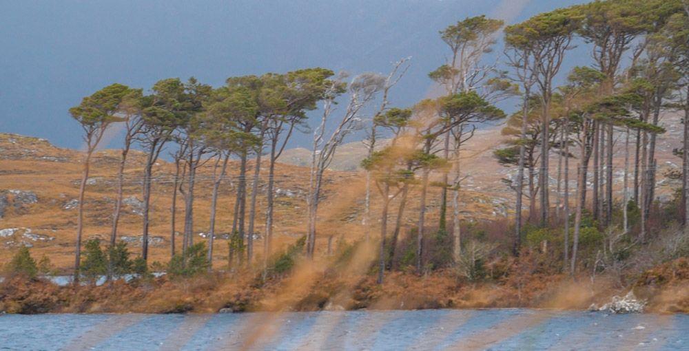 Árboles de Derryclare Lough rodeados de agua