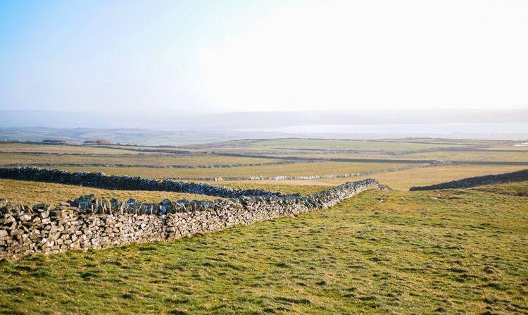 Los márgenes de los prados superiores de los Cliffs of Moher