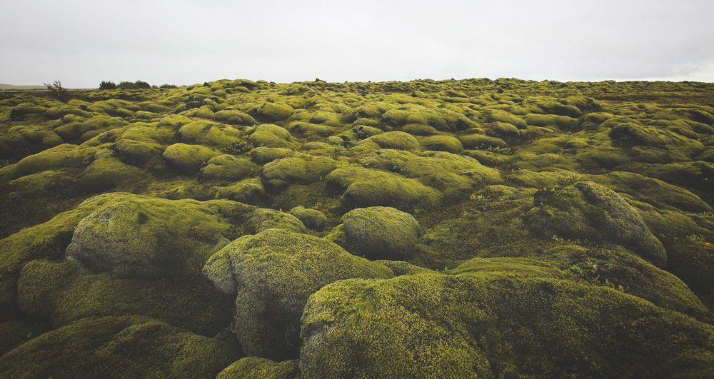 llegar al campo de lava eldhraun en tu viaje a islandia en 10 dias